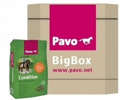 Pavo BB condition 725kg